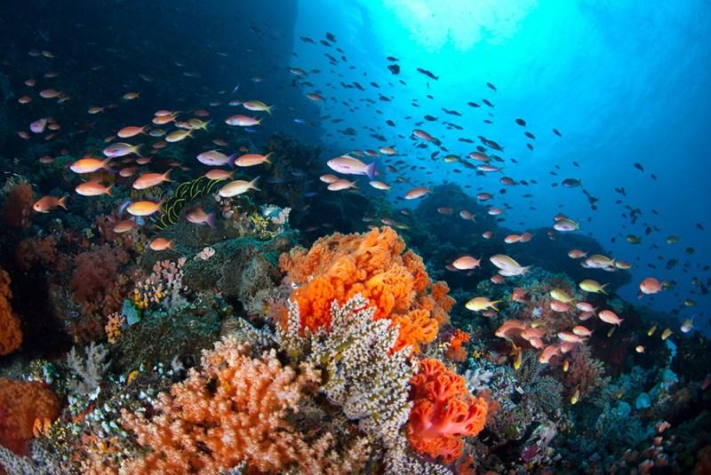Reef Scene Puerto Galera