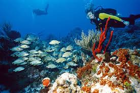 Diving Cozumel