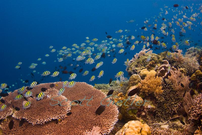 Siladen reef